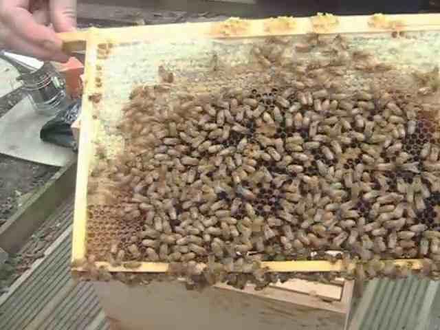 Bee Aware
