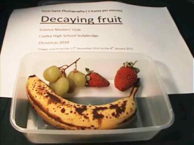 Rotting fruit timelapse